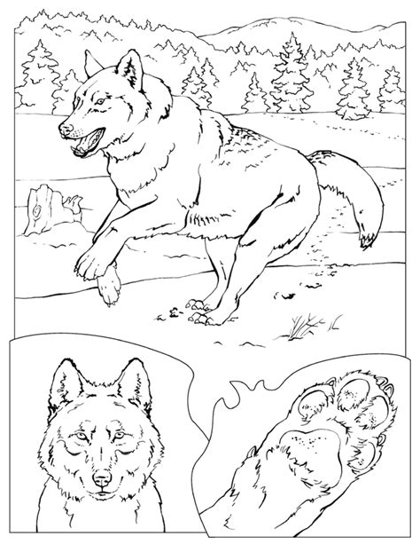 grey s anatomy coloring book pdf gray wolf yellowstone vacation az coloring pages