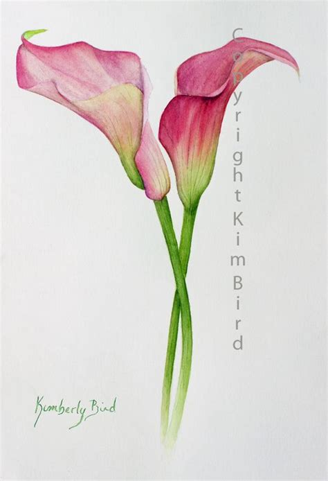 watercolor lily tattoo calla watercolor why not