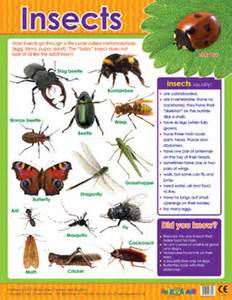 educational posters insects reference chart for