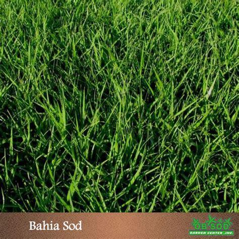 bahia sod ta bay sod 813 936 5081