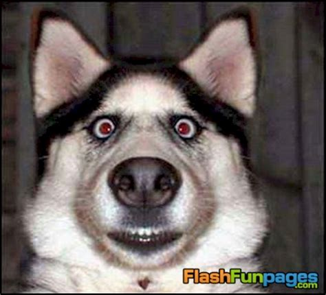 Annoyed Dog Meme - annoyed dog face www pixshark com images galleries