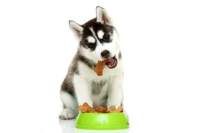 alimenti secchi per cani gli alimenti secchi per cani prolife elevata qualit 224 ed