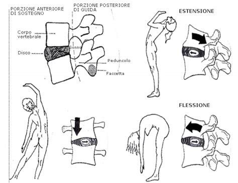 dolore gabbia toracica sinistra movimenti della colonna vertebrale