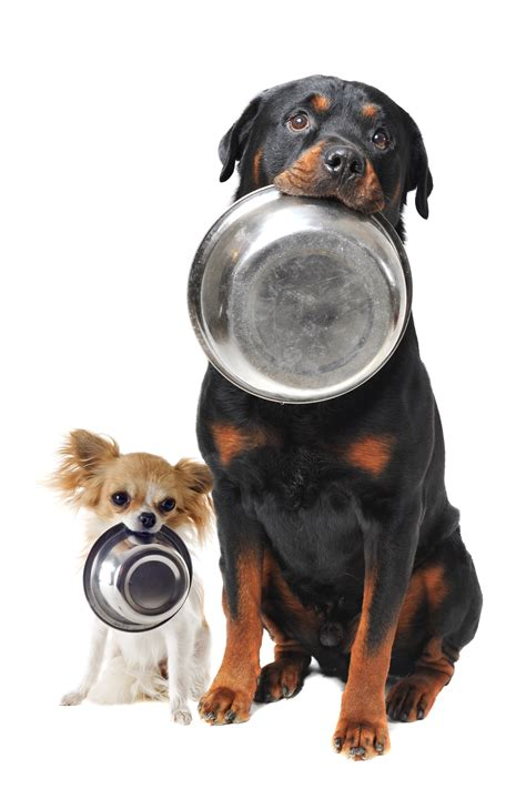 what does a rottweiler eat stuff dogs eat why dogs eat grass eat dirt eat