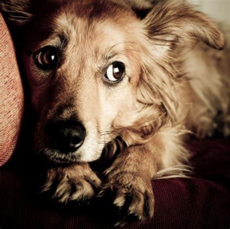 perros con personas psicolmascot perros con miedo a las personas