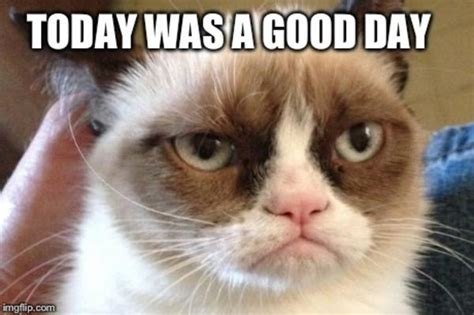 Annoyed Cat Meme - image gallery no meme grumpy kitty