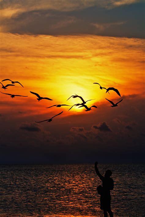 picture sunset dawn sun dusk silhouette backlit