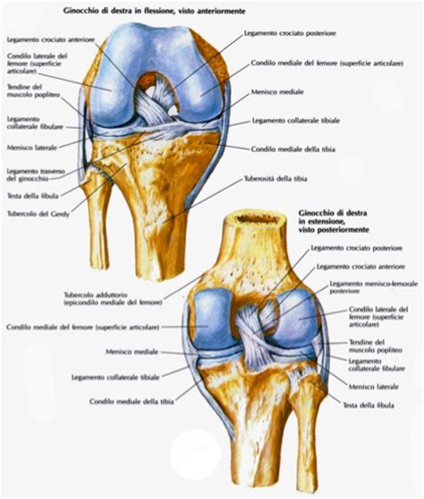 ginocchio dolore interno laterale chirurgia protesica dell anca e ginocchio protesica