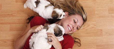 mascotas para un piso razas de perros adecuadas para vivir en un piso