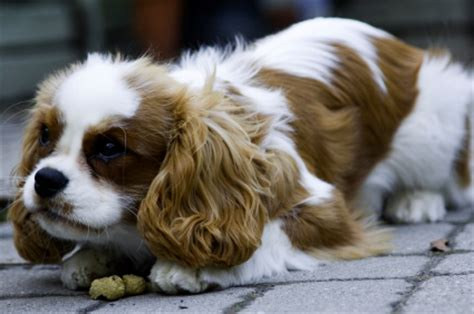 how to stop food aggression in puppies how to stop food aggression in dogs thedogtrainingsecret the secret
