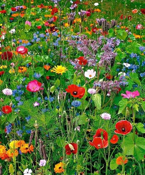wildflower backyard wildflower garden from seeds garden ideas pinterest