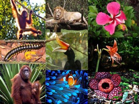 Bio Di Malaysia biodiversiti