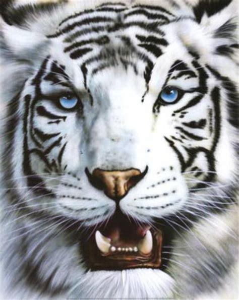 imagenes animales bellos los animales mas bellos de todos taringa