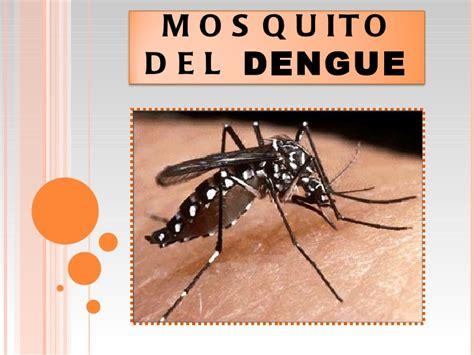 imagenes groseras sobre el chikungunya mosquito del dengue video