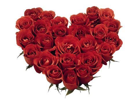 wallpaper rangkaian bunga mawar gambar bunga mawar jpeg shofadhief
