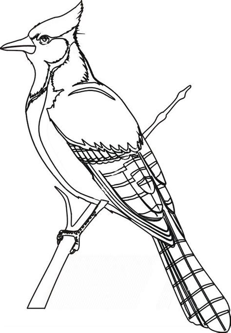 coloring the o jays and coloring pages on pinterest bird coloring pages blue jay coloringstar