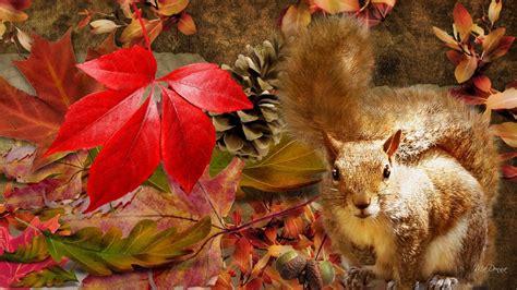 animal seasons squirrels autumn squirrel autumn hd desktop wallpaper widescreen high definition fullscreen
