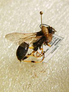 Pest (organism) - Wikipedia Invertebrates Animals Names