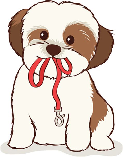 how to clip a shih tzu shih tzu clip vector images illustrations istock