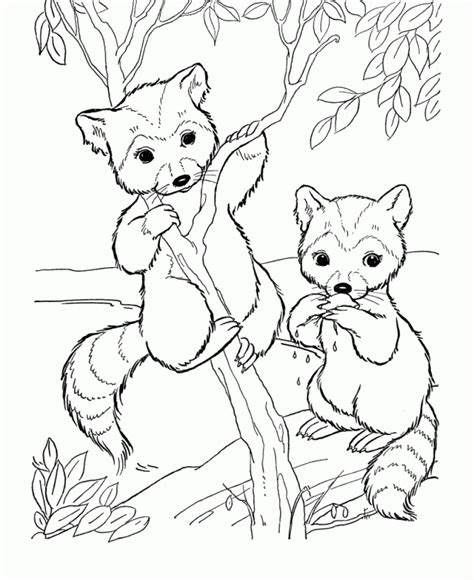 coloring books for toddlers animals coloring children activity books for ages 2 4 4 8 boys early learning relaxation for workbooks toddler coloring book volume 1 free raccoon animal coloring pages printable
