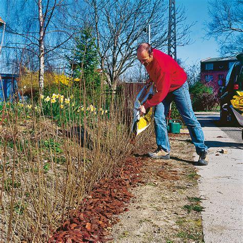 Wie Pflanze Ich Eine Hecke 5269 by Hecke Pflanzen Sichtschutz Selbst De