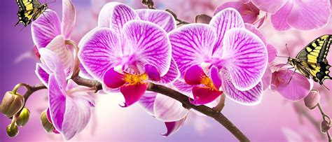far fiorire orchidee il meraviglioso mondo delle orchidee greenious