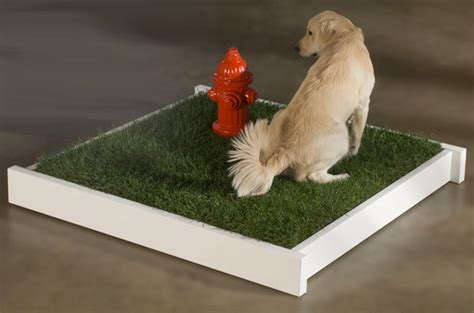 hydrant for dogs petapotty hydrant for dogs designer supplies and puppy clothes at
