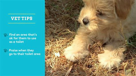 how to potty a stubborn puppy potty step 3 breeds picture