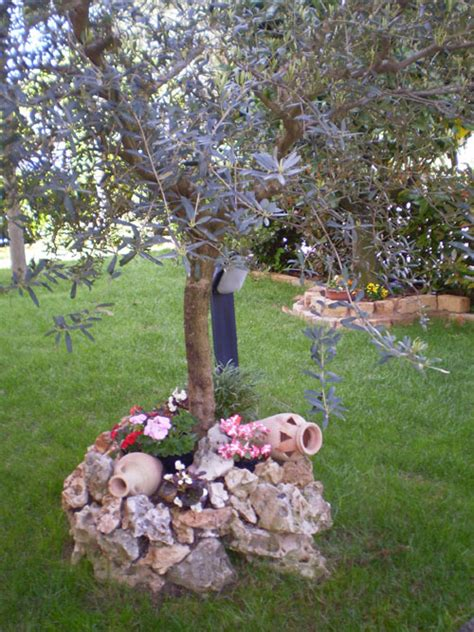 giardino con ulivo ulivo come prendersi cura dell albero di ulivo in balcone