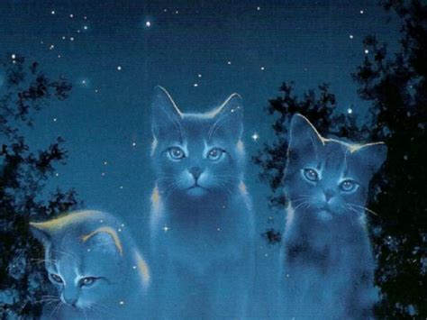 wallpaper cat night which warrior cat are you from the journey