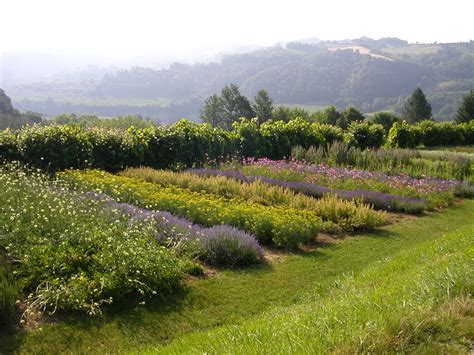 giardino delle giardino delle erbe augusto rinaldi ceroni orto botanico