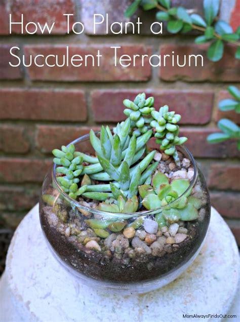succulent terrarium   clear glass bubble bowl