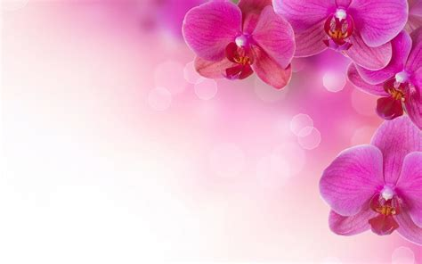 pink flowers background 183