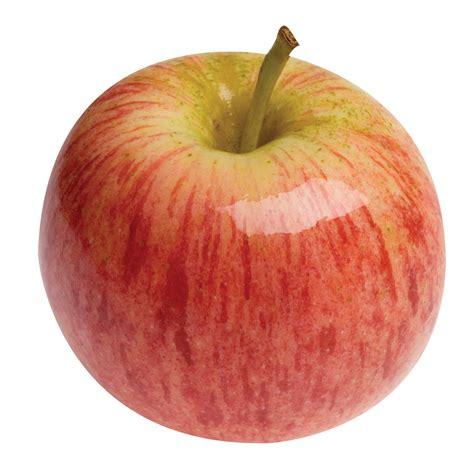 klasifikasi buah apel  gambar  foto uniknya