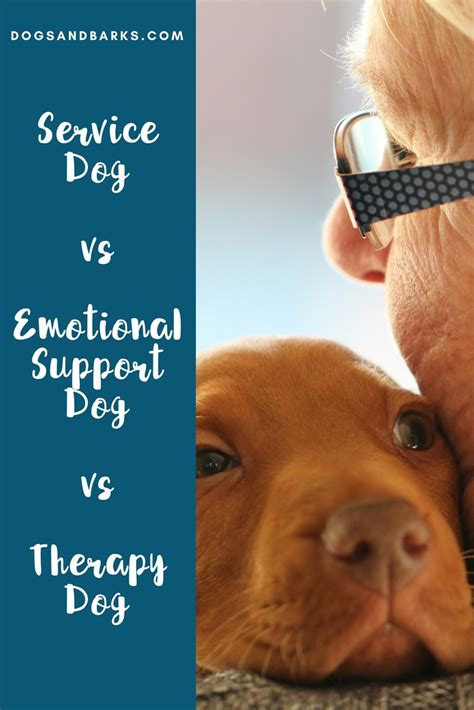 service vs therapy service vs emotional support vs therapy dogs and bark