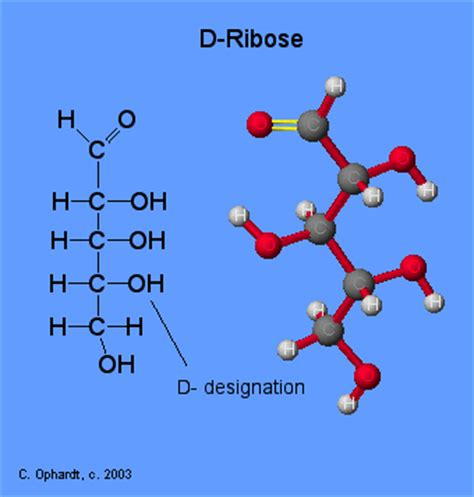 d ribose carbohydrates carbohydrates ribose