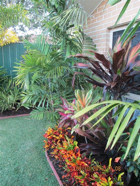 ptychosperma macarthurii croton border cordylines tropical garden style pinterest