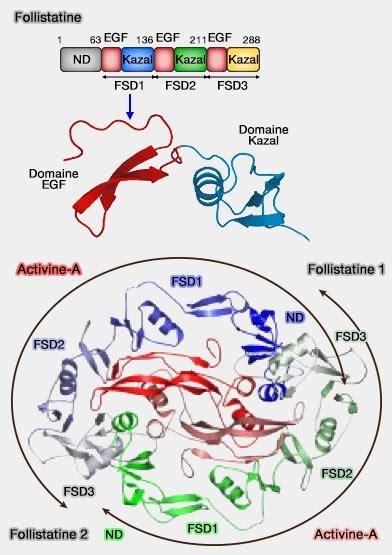 alimenti progesterone hormones 224 vis 233 e reproductive activines