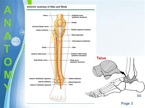 Tibial Plafond by Pilon Fractures Or Quot Plafond