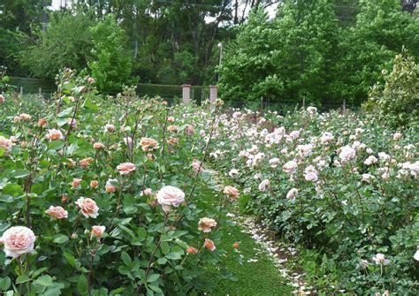 imagenes de jardines llenos de rosas en el jardin rosas para enamorarse