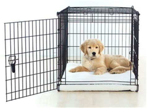 puppy using bathroom in crate house training your puppy canine master