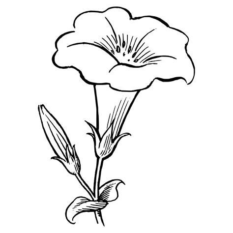 dibujos flores grandes colorear
