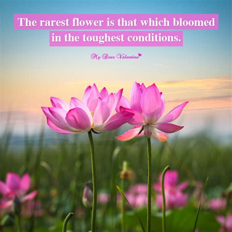 Flower Quotes Motivational Flower Quotes Quotesgram