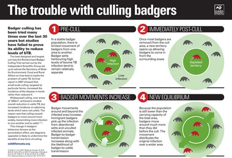 badger cull petition petition the government to stop expanding the badger cull