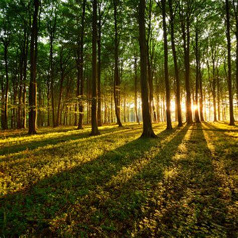 Tree Blinds Wald Bilder Jetzt Motive Bei Myposter Entdecken