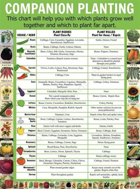 companion planting chart lots  great info video tutorial