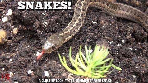 Garter Snake Meme 25 Best Ideas About What Animals Eat Snakes On