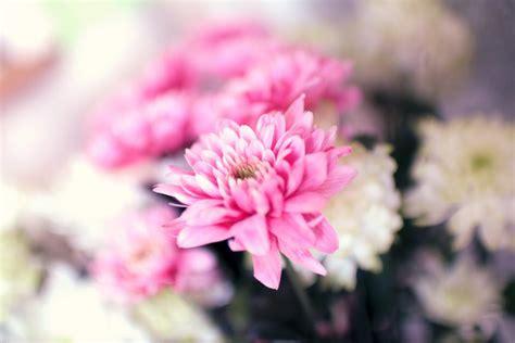 Die Schönsten Blumen 4899 by Die Sch 195 182 Nsten Kostenlosen Blumenbilder Pexels