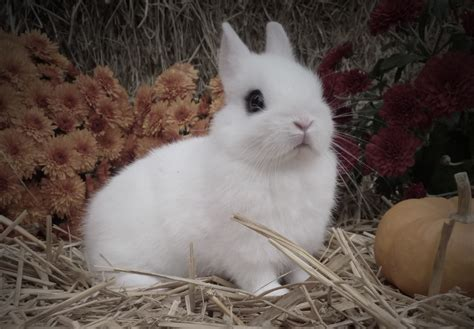 Bunny Record Rabbit Record Keeping