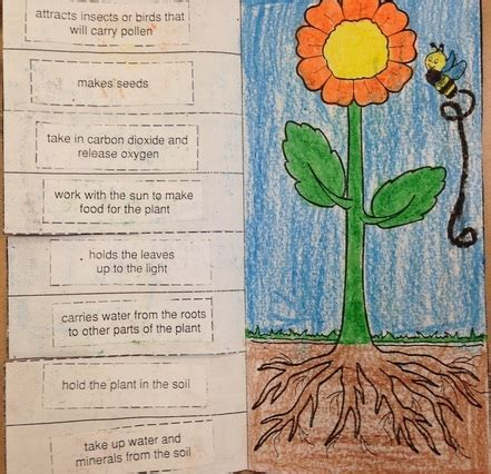 7 Smells That Make My Insides Flip by Plant Cycle Unit Colleen Kapsch